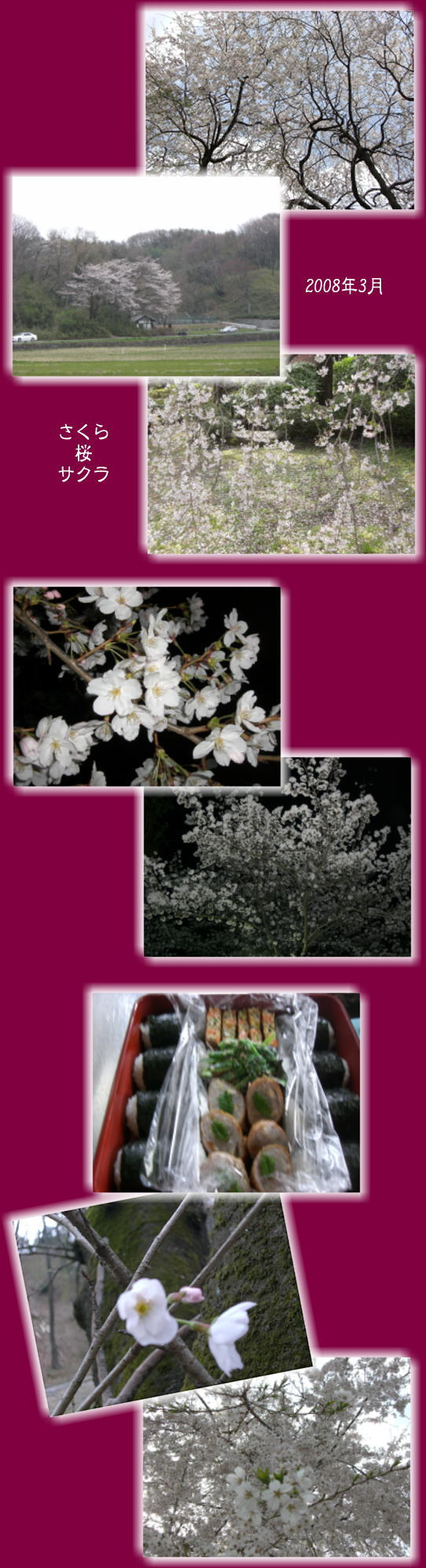 さくら桜サクラ