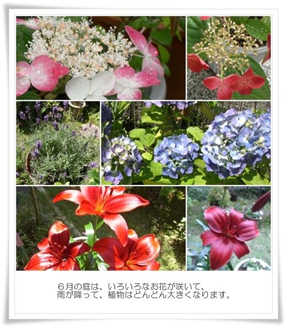 6月の庭01.jpg